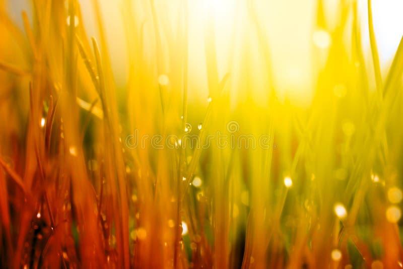 abstrakt bakgrundsnatur Höstgräs med vattendroppar royaltyfri fotografi