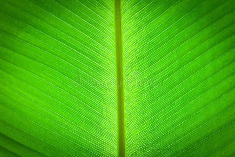 Download Abstrakt Begrepp Av Bananleafbakgrund Fotografering för Bildbyråer - Bild av bostonian, lampa: 27288627