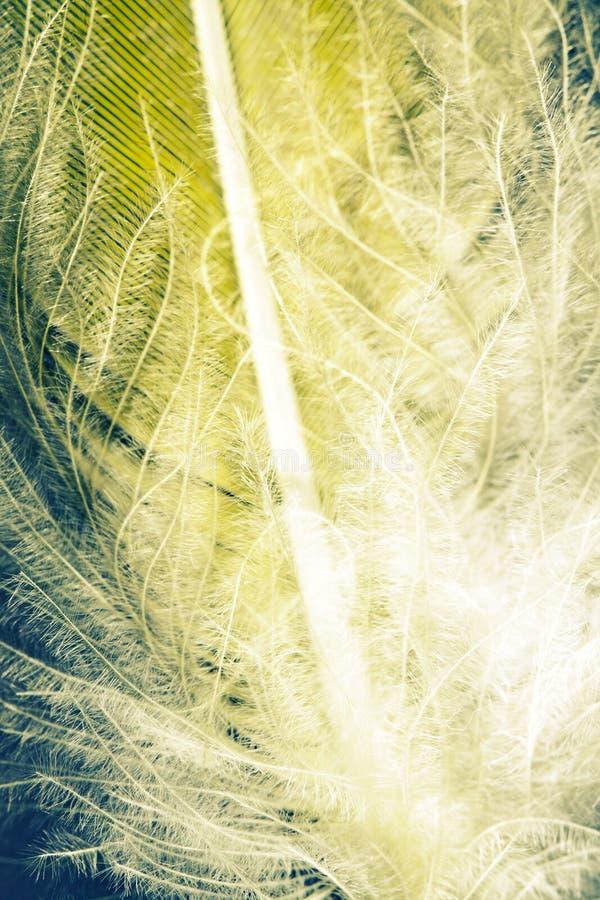 Download Abstrakt Begrepp För Pennfjäder Fotografering för Bildbyråer - Bild av försiktigt, kulört: 37347707