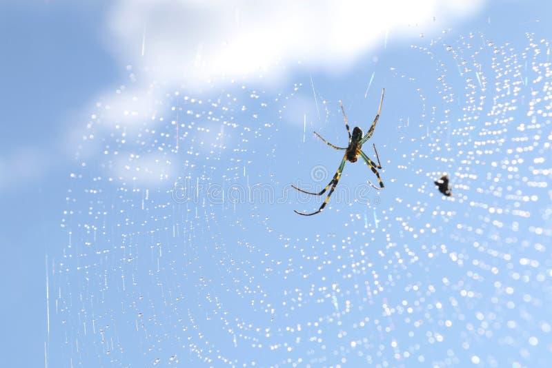Abstrakt begrepp 2 för spindel för daggdroppe netto arkivfoto