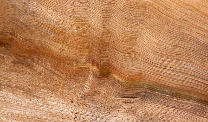 Abstrakt begrepp gömma i handflatan Wood textur för ormbunksbladet fotografering för bildbyråer