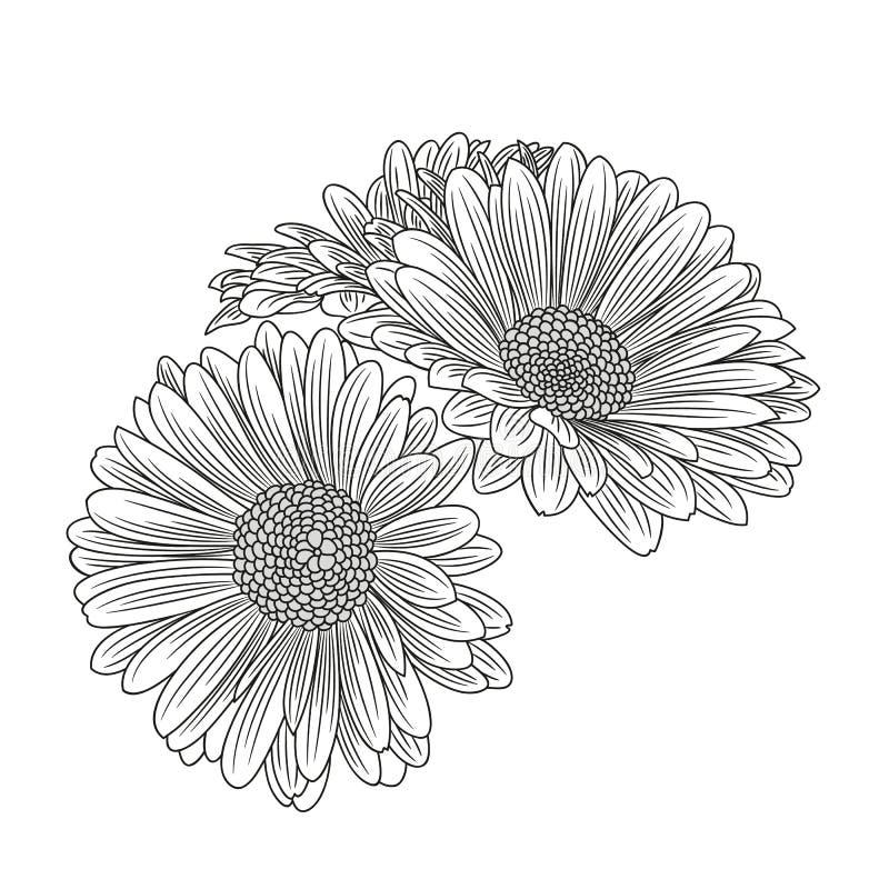 Abstrakt begrepp hand-dragen blommakamomill Beståndsdel för design också vektor för coreldrawillustration royaltyfria bilder
