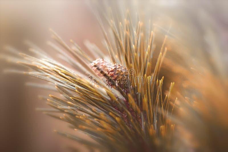 Abstrakt begrepp sörjer trädfilialen arkivfoton