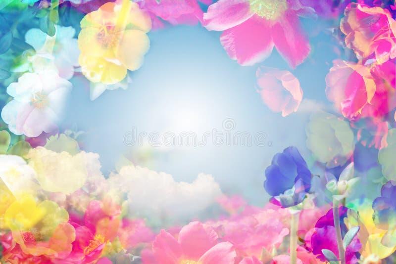 Abstrakt begrepp som färgas med härliga Moss Rose blommor royaltyfria foton