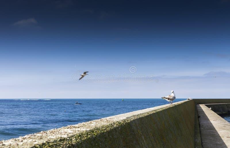 Abstrakt begrepp som oändlighetsskott i lågvatten med en stor fördämning och vågbrytare royaltyfri fotografi
