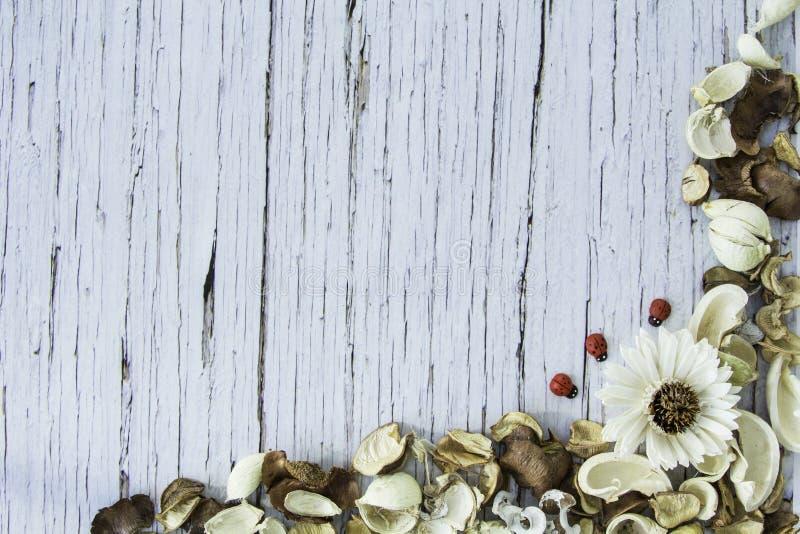 Abstrakt begrepp torkad blommaram på blå gammal Wood bakgrund arkivbild