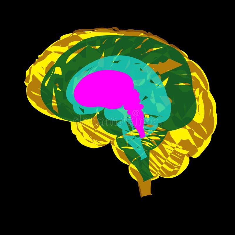 Abstrakt bild av utvecklingen av den mänskliga hjärnan från embryot till vuxenlivet vektor illustrationer