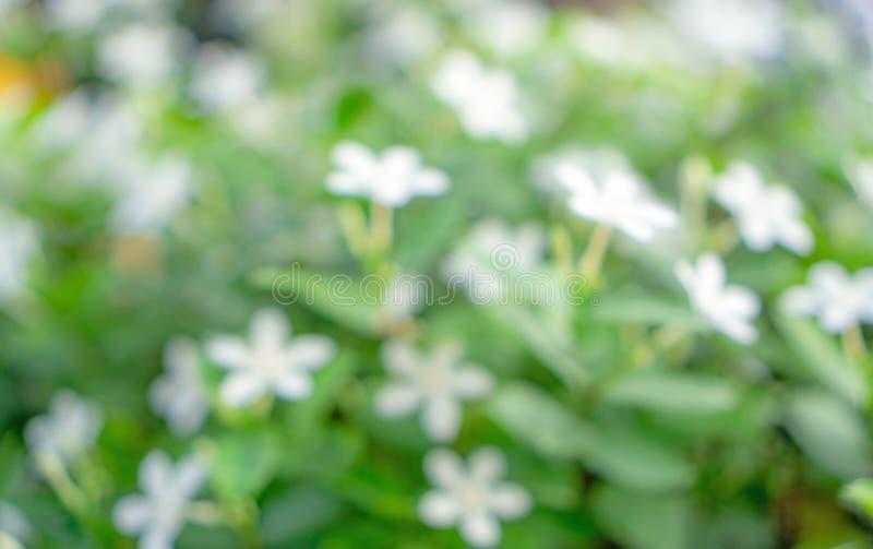 Abstrakt bild från grönskabladnaturen, bokehfoto av den nya mjuka vita blomman som blommar på suddig bakgrund för gröna sidor arkivfoton