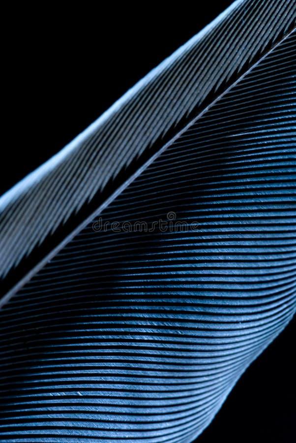 abstrakt blå fjäder arkivfoto