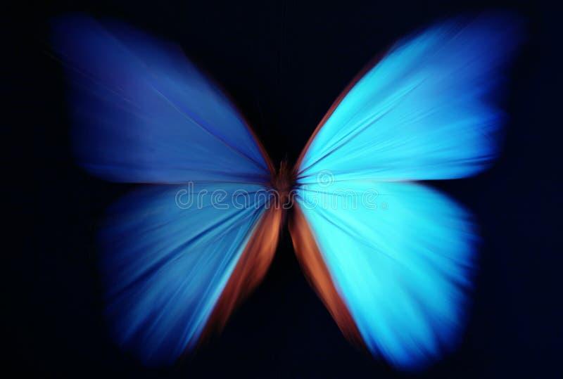 abstrakt blå fjärilszoom royaltyfria foton