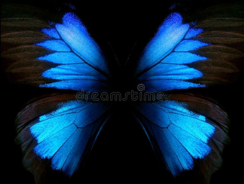 abstrakt blå modell Vingar av fjärilen Ulysses closeup Vingar av en fjärilstexturbakgrund vektor illustrationer