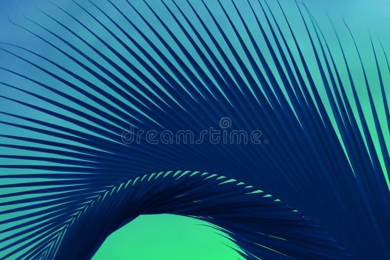 Abstrakt blad för popArt Surreal Style Deep Blue palmträd på mintkaramellgräsplanbakgrund royaltyfria bilder