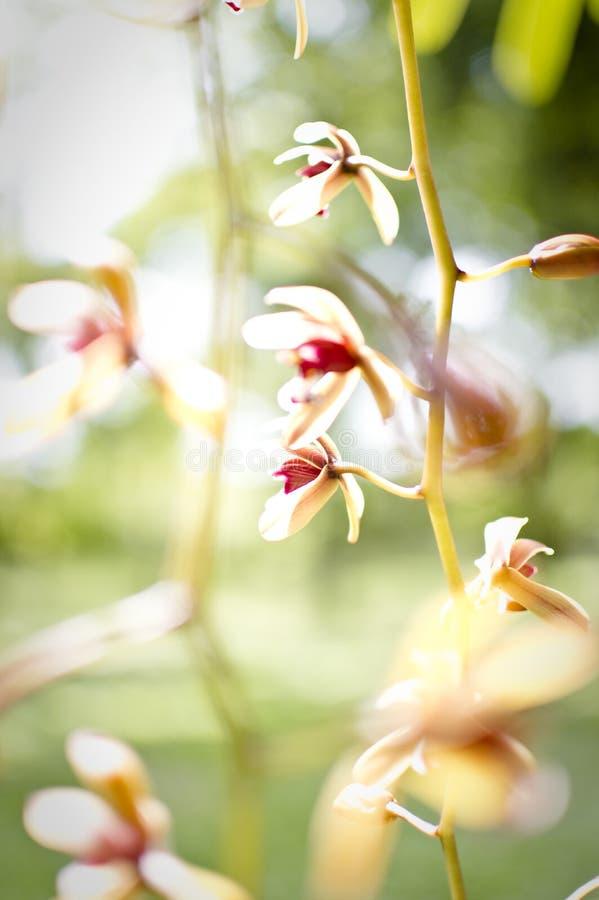 Abstrakt blom- bakgrund i tappningstil