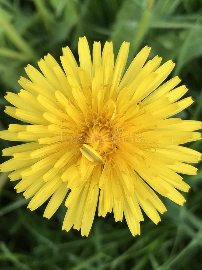 Abstrakt detaljerad closeupmakrosikt av Textured härlig gul blomma-, fauna- och florabakgrund arkivfoton