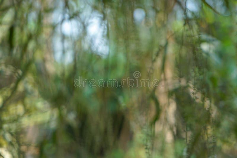 Abstrakt drömlik plats av härliga defocused naturliga gräsplansidor, suddig bakgrund för bokeh för trädfilialer, blomma- och himm royaltyfri bild