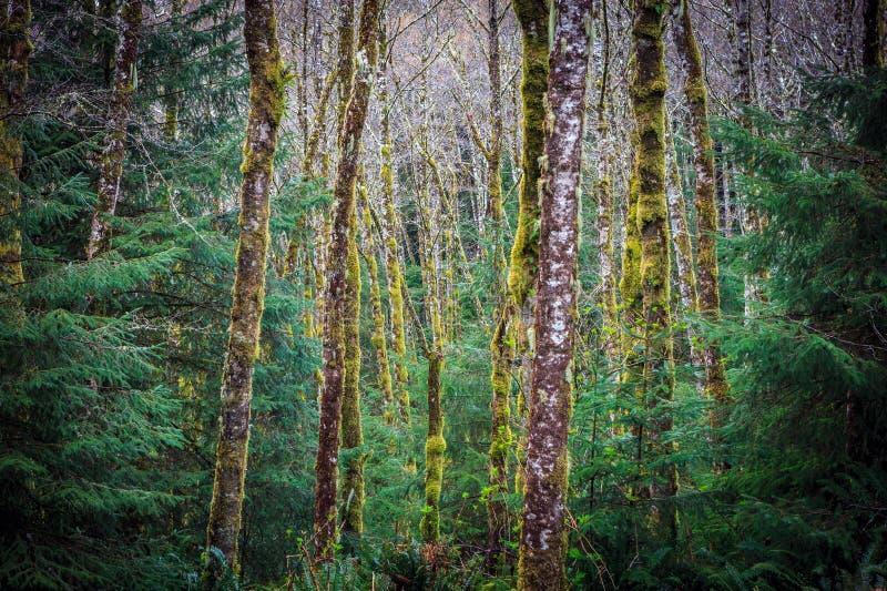 Abstrakt drzewa w lesie obrazy stock