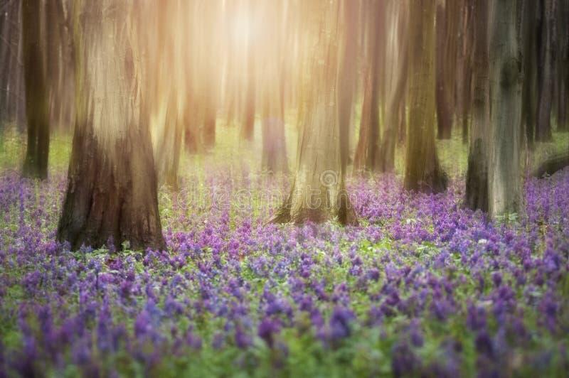 Abstrakt foto av blommor i en skog med lampa royaltyfria bilder