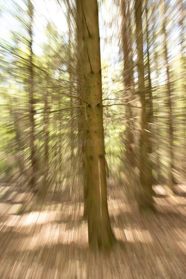 Abstrakt foto av ett träd arkivbild