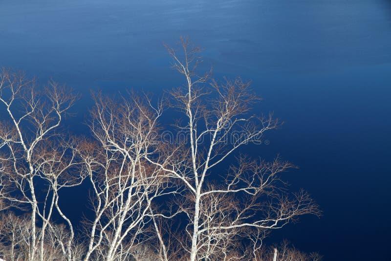 abstrakt frosttrees royaltyfri foto