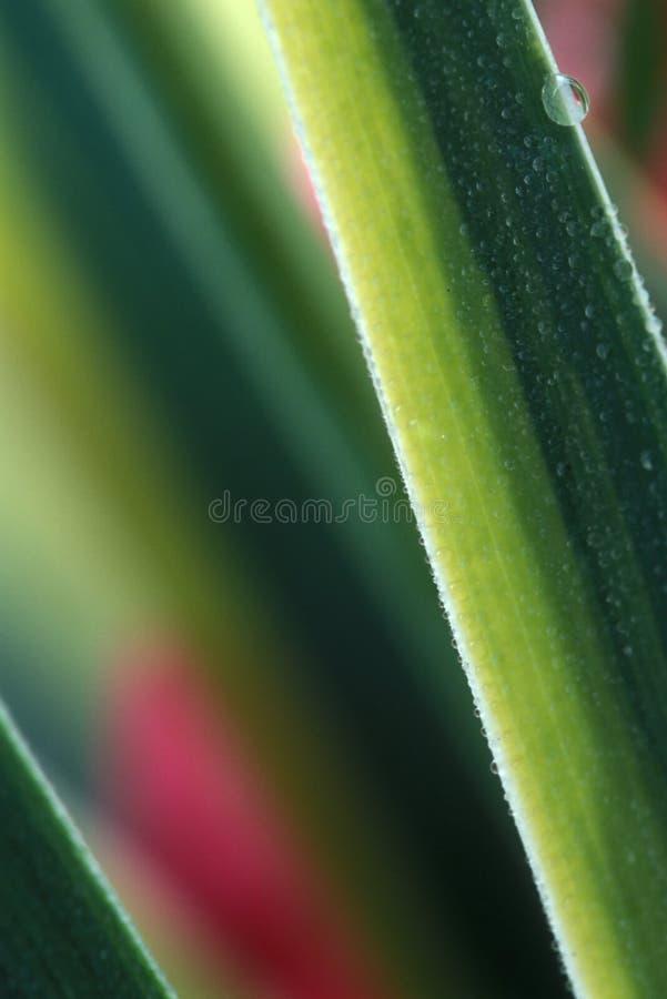 abstrakt gräs royaltyfri foto