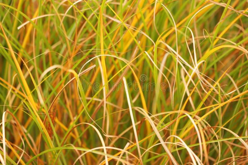 abstrakt gräs royaltyfri fotografi