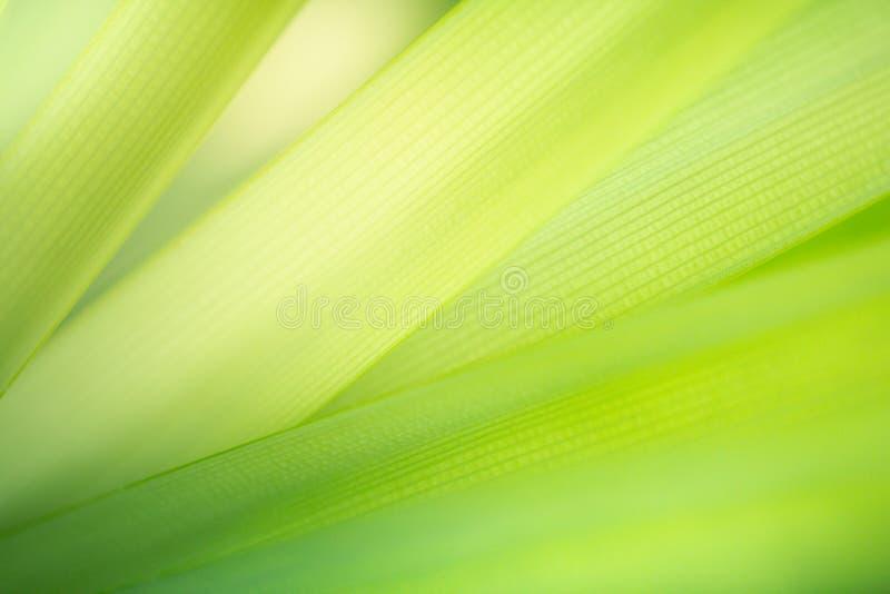 Abstrakt grön naturbakgrund Textur för Closeupgräsplanblad för naturlig och friskhettapetbegrepp fotografering för bildbyråer
