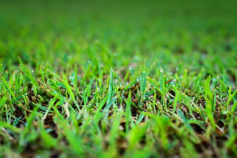 Abstrakt grönt gräs för naturliga bakgrunder royaltyfri fotografi