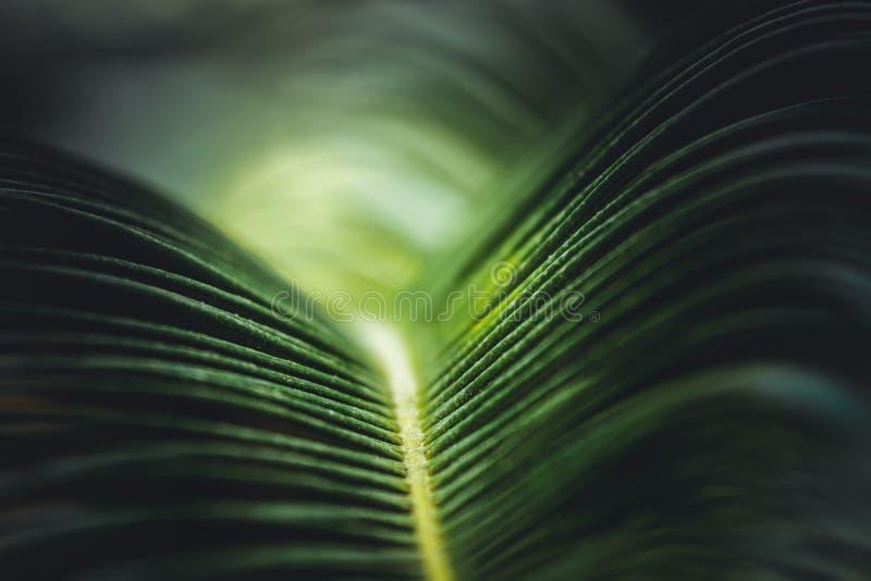 Abstrakt grönt naturbakgrundsbegrepp, lockiga sidor, färgrika ljus royaltyfri foto