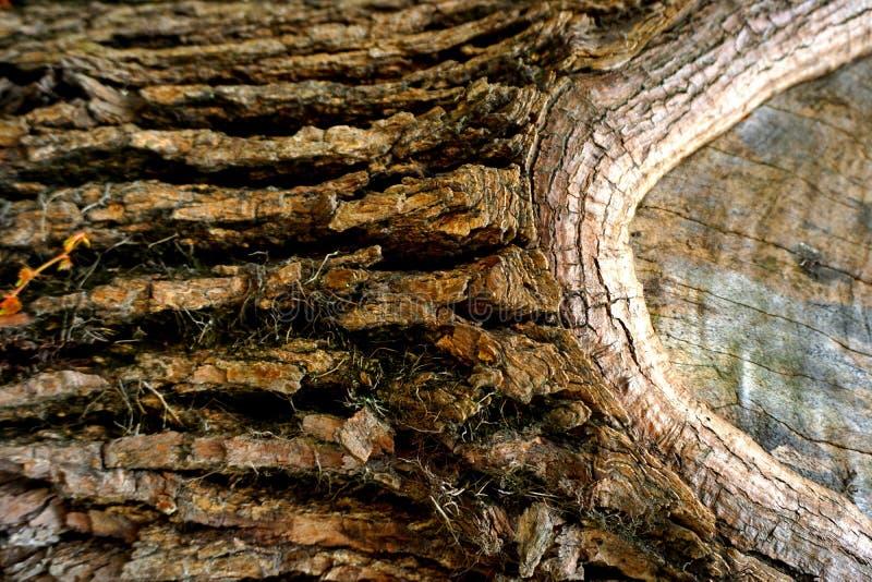 Abstrakt grungebakgrund - brunt skäll av trädet royaltyfria bilder