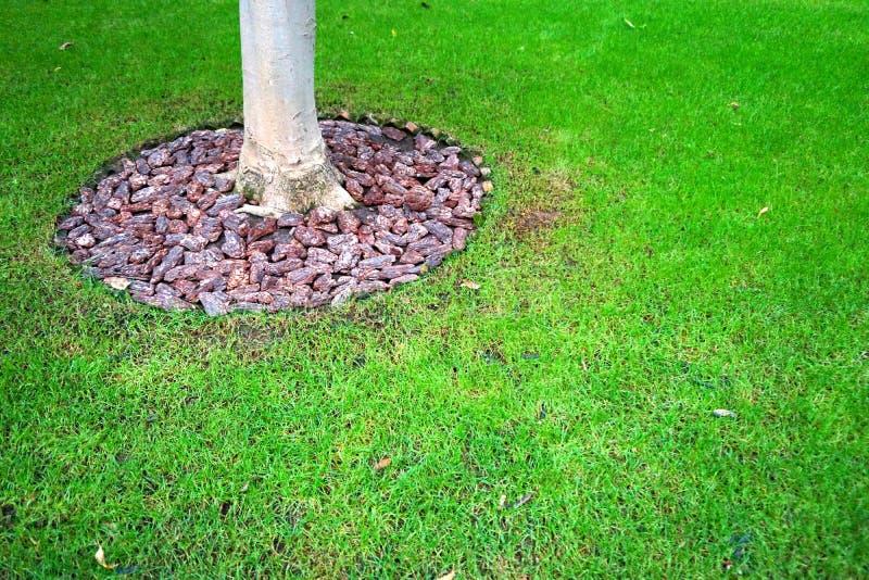 Abstrakt grungebakgrund - vaggar, stammen, och grönt gräs parkerar in royaltyfria foton