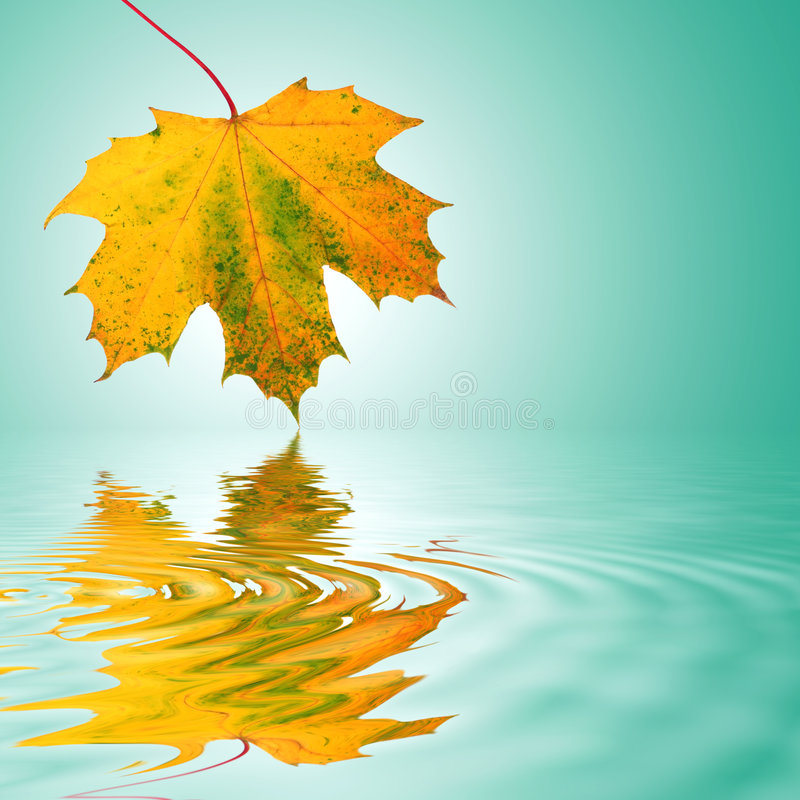 abstrakt guld- leaf arkivfoto