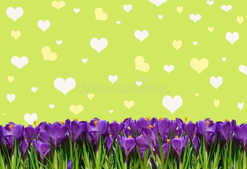 Abstrakt-Hintergrund mit Krokussen für Grüße glücklichen Valentinsgruß lizenzfreie abbildung