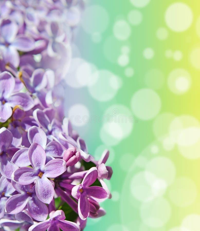 Abstrakt-Hintergrund mit Tulpen und Krokussen für den Gruß mit a stockfotos