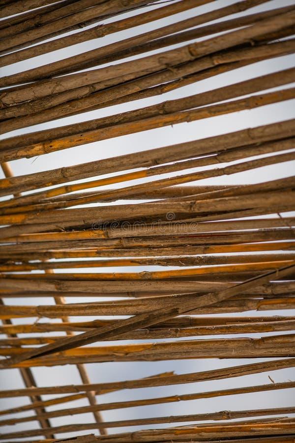 Abstrakt-Hintergrund von der trockenen Bambusniederlassungsbeschaffenheit lizenzfreies stockbild