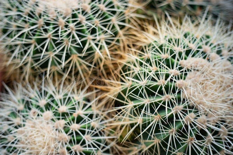 Abstrakt kaktusnärbild royaltyfri foto
