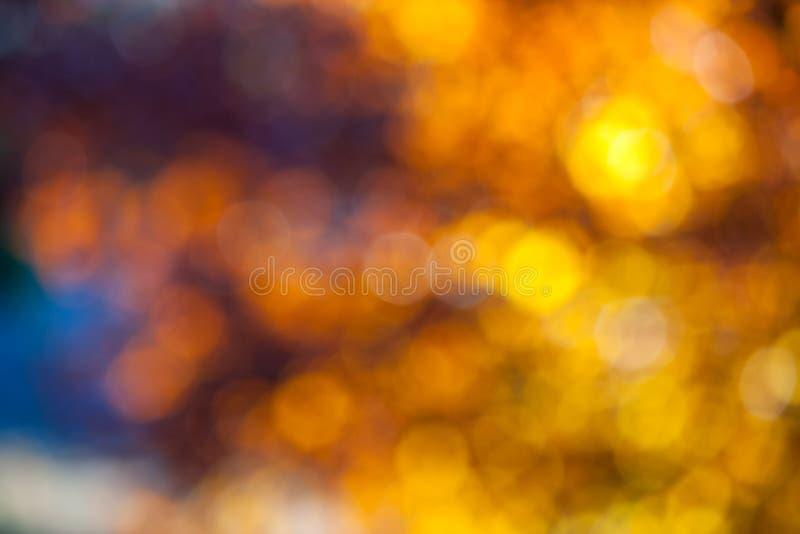 Abstrakt ljus till och med trädsidor på solnedgången royaltyfri bild
