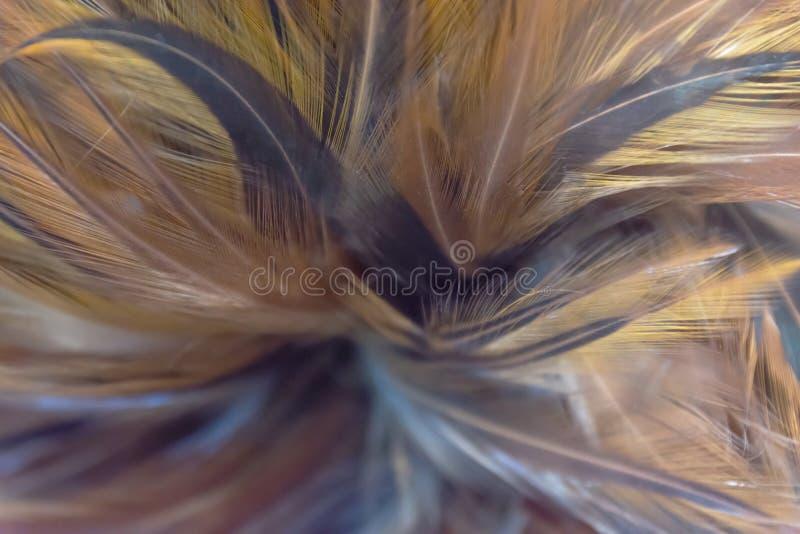 Abstrakt modell av färgrika fjädrar för bakgrundstextur arkivfoton
