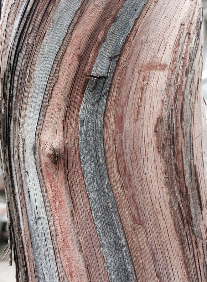 Abstrakt natur arkivfoton