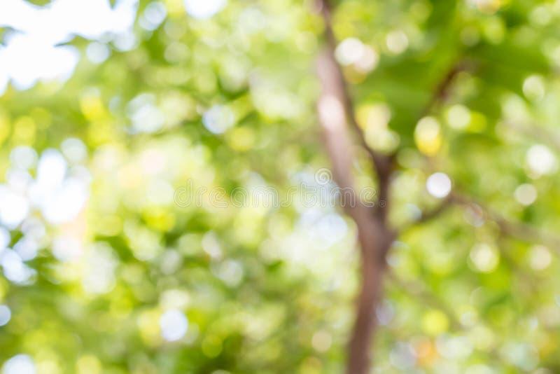 Abstrakt natur, grön bokeh av trädet royaltyfri bild