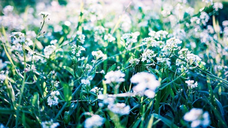Abstrakt naturbakgrund med gräs och lösa blommor royaltyfri foto
