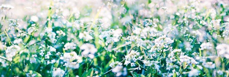 Abstrakt naturbakgrund med gr?s och l?sa blommor royaltyfri foto