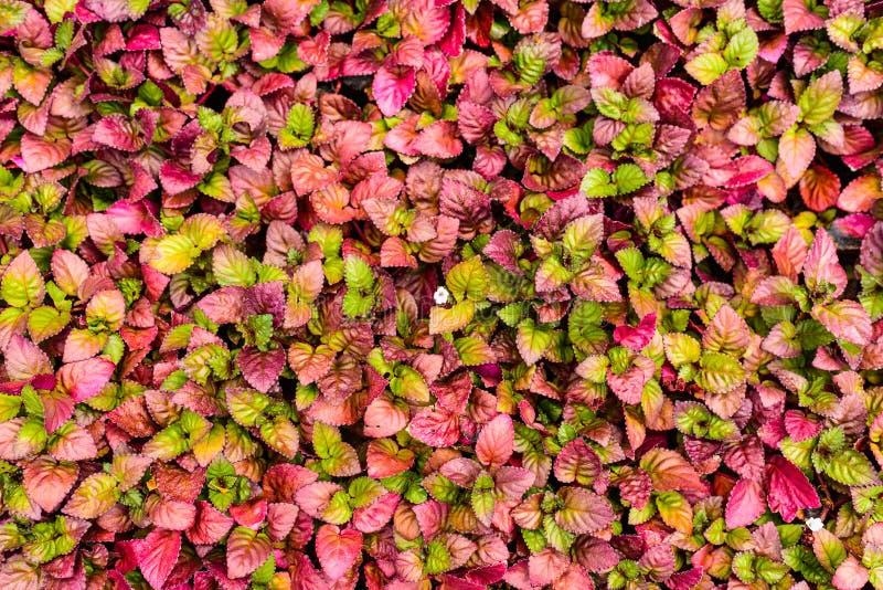 Abstrakt naturbakgrundstextur royaltyfri foto