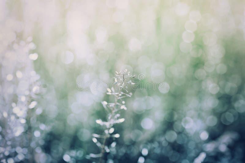 Abstrakt naturlig bakgrund med bokeh, blå och grön färg för tappning, naturtextur, sommaräng, skymning arkivfoton