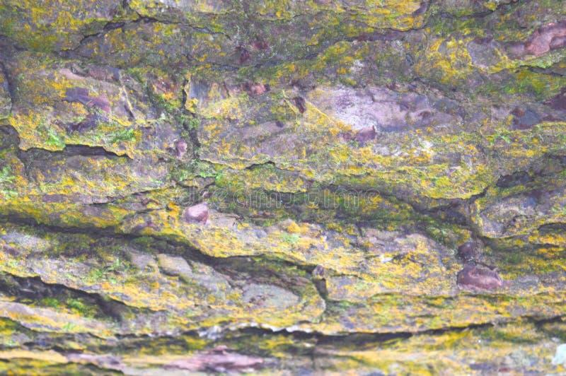 Abstrakt naturlig textur och modell - trädskäll med tillväxt av formen på yttersida royaltyfri fotografi