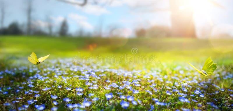 Abstrakt naturvårbakgrund; vårblomma och fjäril royaltyfri foto
