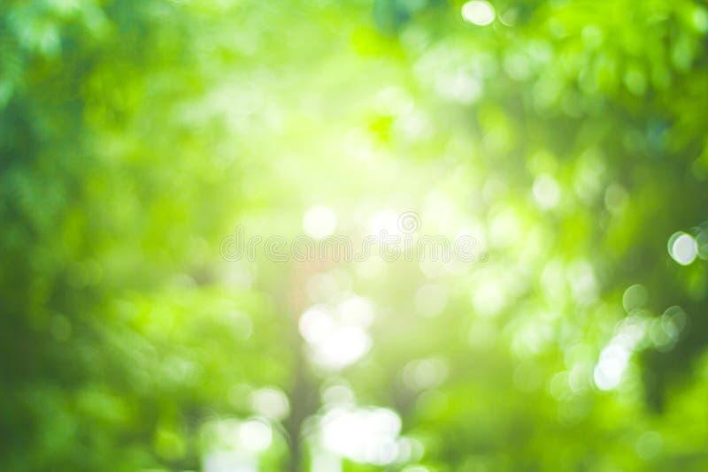 Abstrakt natury plamy zielony tło i światło słoneczne zdjęcia royalty free