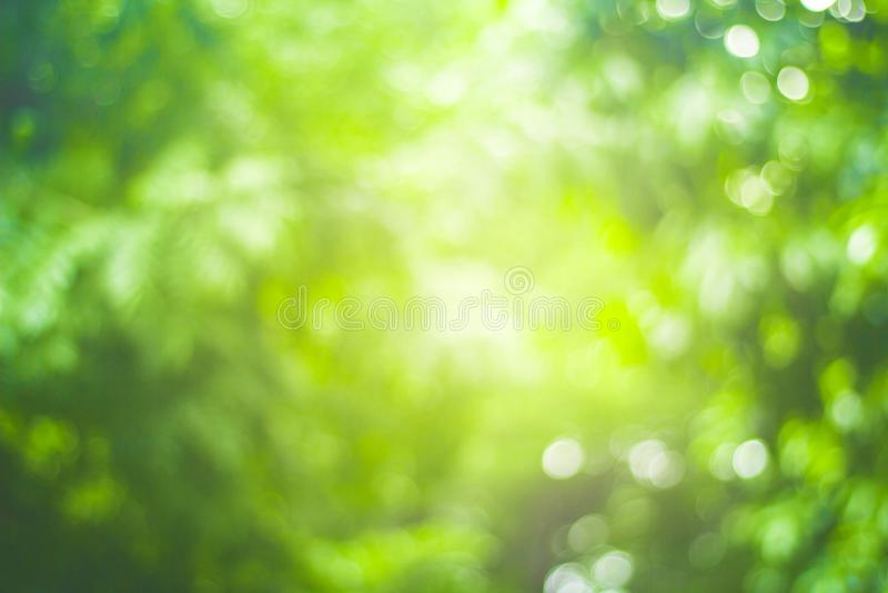 Abstrakt natury plamy zielony tło i światło słoneczne obraz stock