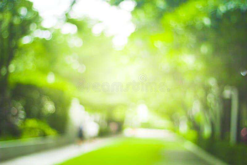 Abstrakt natury plamy zielony tło i światło słoneczne obraz royalty free