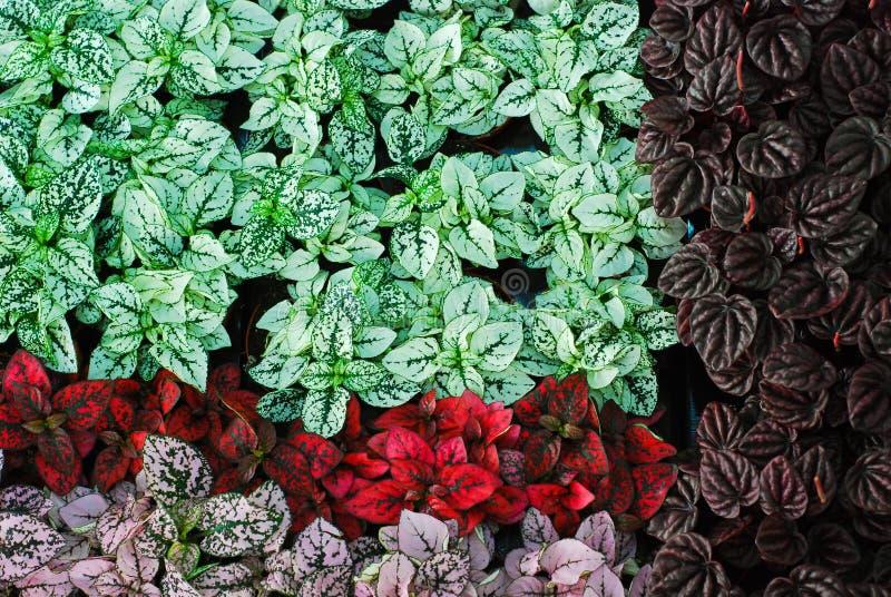 abstrakt ny trädgård fotografering för bildbyråer