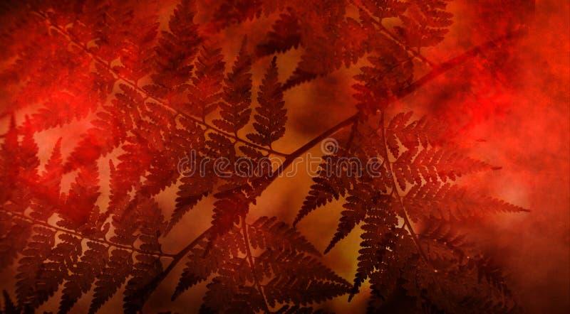 Abstrakt Opuszcza natury tło zdjęcie royalty free